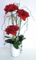 amaryllis en pot - hauteur 74 cm - pot blanc
