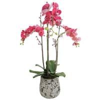 orchidée Phalae pot H84 D20