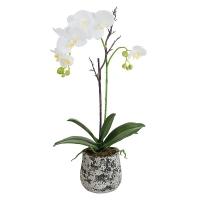 orchidée Phalae pot H67 D16