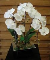 composition super orchidée - contenant gris pierre